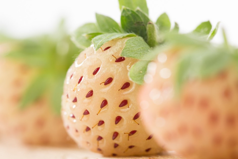 WHITE STRAWBERRIES OR PINEBERRIES: THE MOTHER OF ALL STRAWBERRIES